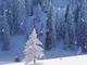 Moods: Snowfall